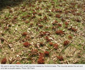 Image of bee mounds