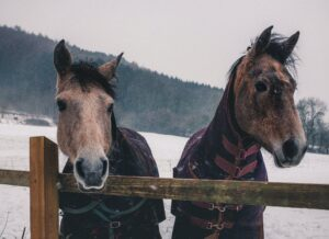 Cover photo for Caring for Your Horse in the Winter