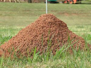 Cover photo for Fire Ant Control